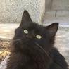 ふわふわの長い毛の黒ネコちゃん
