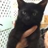 黒子猫3か月♥アイビー♥手術済 サムネイル3