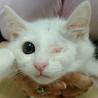 片目でも元気いっぱいな子猫の里親大募集!