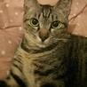 小柄な美猫フランちゃん