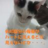 2014/10/03保護、名前:アクア♂