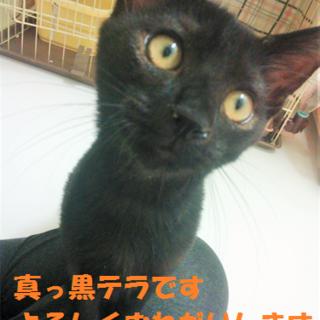 2014/10/03保護、名前:テラ♂