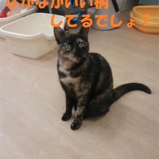 2014/06/01保護、名前:ちゃい♀