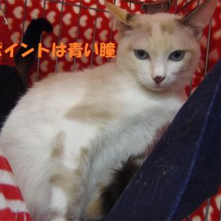 2014/06/01保護、名前:ちゃちゃ♀