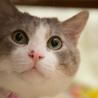 猫ストーカーと暮らしませんか?☆里親さま内定! サムネイル6