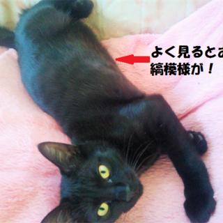 2014/05/11保護、名前:くーろん♂
