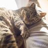 フミフミ大好き♪ぷっくりマズルのまん丸キジトラ猫 サムネイル3