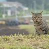 フミフミ大好き♪ぷっくりマズルのまん丸キジトラ猫 サムネイル7
