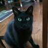 グリーンの瞳の黒太郎
