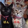 黒猫ぽん君、キジトラのららちゃん♪