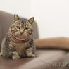 フミフミ大好き♪ぷっくりマズルのまん丸キジトラ猫 サムネイル5