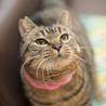 フミフミ大好き♪ぷっくりマズルのまん丸キジトラ猫