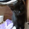 黒猫のレモンくんです。