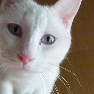 目がブルーの真っ白な男の子
