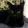 人も猫も大好き、美しく甘えん坊な黒猫リカちゃん