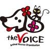 the VOICE(ぼいす)