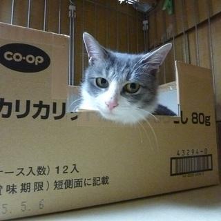 人間大好き猫嫌いな女の子の猫