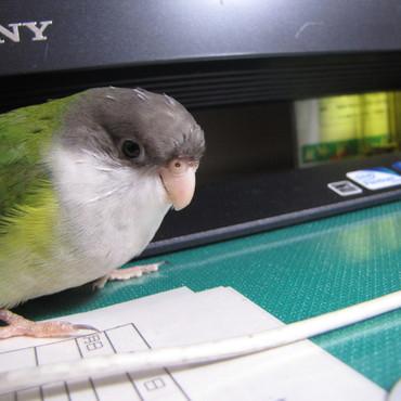 パソコンの前で ハイポーズヽ(*´∀`)ノ