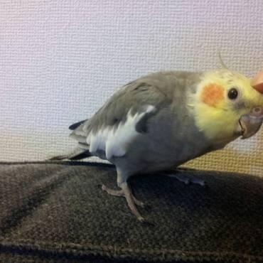 ちゅー太郎の写真