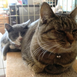 保護猫の世話をするラム