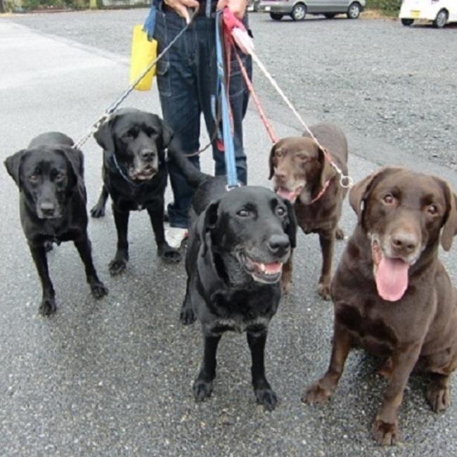 すべての犬の幸せを願って保護活動中のカバー写真