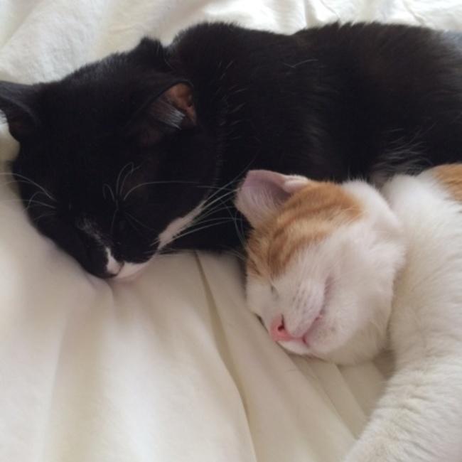 NPO法人平塚のら猫を減らす会のカバー写真