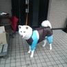 雨の日はカッパ着てお散歩