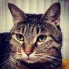 猫のための小さなお家(保護活動者)