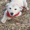 公園で産まれた仔犬ちゃん