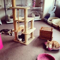 シェルターで猫の見学会 in 江東区