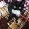 黒猫の子猫♀ 里親募集!!