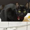 大人しい黒猫女子はなちゃん