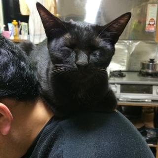 真っ黒猫のメス