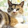 すっかりゴロにゃん猫に変心したマリアちゃん♀ サムネイル2