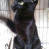 ぴかぴかの黒猫ニコくん☆4ヶ月