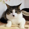 壁伝いにす~りすり猫白血病(+)♂チロル サムネイル3