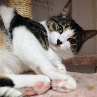 壁伝いにす~りすり猫白血病(+)♂チロル