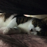 壁伝いにす~りすり猫白血病(+)♂チロル サムネイル5
