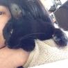 甘えんぼの黒猫 サムネイル2