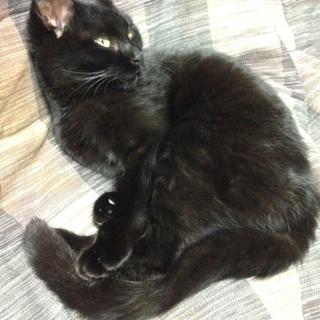 甘えんぼの黒猫