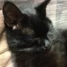 甘えんぼの黒猫 サムネイル5