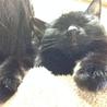 甘えんぼの黒猫 サムネイル3