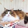高音ソプラノボイスの のじょみくん♂猫白血病(+) サムネイル2