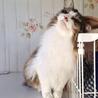 高音ソプラノボイスの のじょみくん♂猫白血病(+) サムネイル6