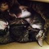 かわいい子猫たちを助けてください