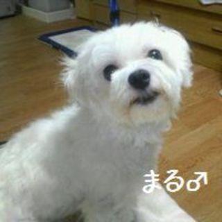 まる(wan life)