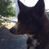 優しく元気な忠犬です!! サムネイル4