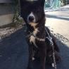 優しく元気な忠犬です!! サムネイル6