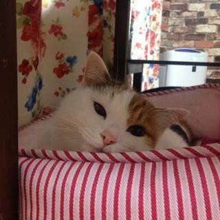 かわいい顔して猫パンチ炸裂!キャンディー♀