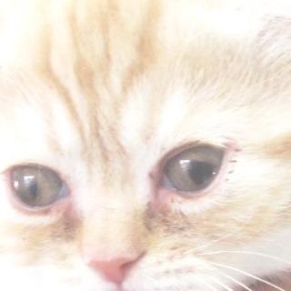 ハート形の左目を持つ子猫